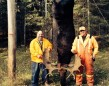 Kevin Vardy and hunting buddy Ed Scott on opening day of Moose 2014, just west of Thunder Bay. Kevin harvested this bull moose (with a 52-inch rack) with Browning A Bolt in Winchester 300 Short Mag.