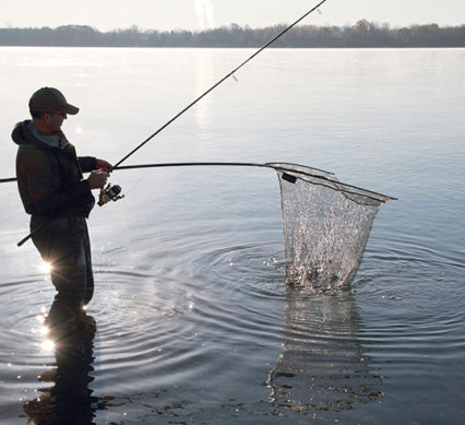 cold-water carping