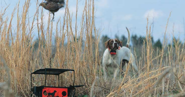 live birds - training a gun dog