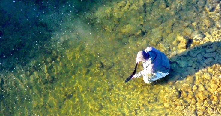 Brian - fish rescue