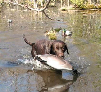 dog-training-exercises