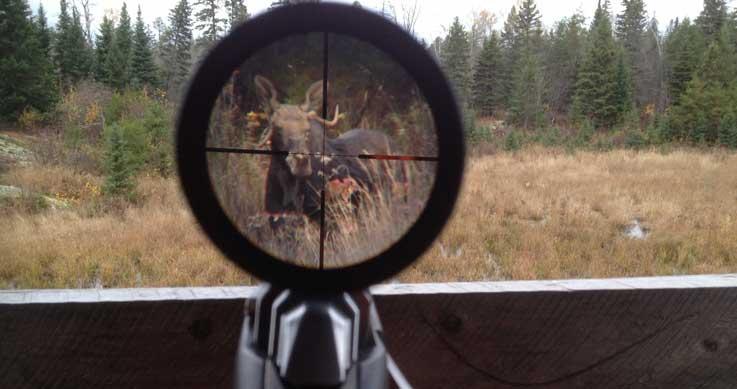 photo-friday-winner-nov.21-moose-viewfinder