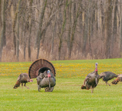 turkey quiz 2017