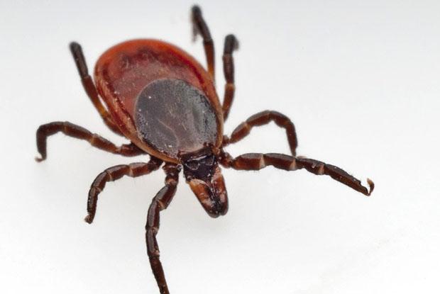 Bill 27 Lyme disease