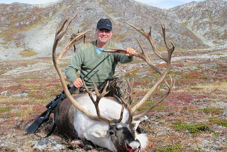 Greenland caribou