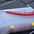 colour - colourful bait
