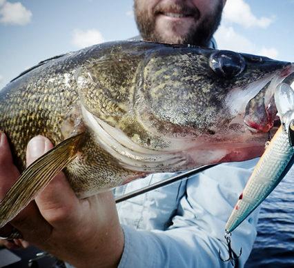 jerked - caught walleye