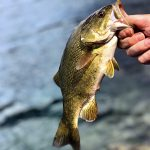 Jessa Kostecki caught this smallmouth bass off some rocks in Thunder Bay