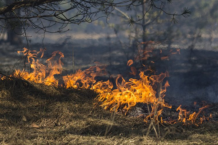 Fewer wildfires in Ontario