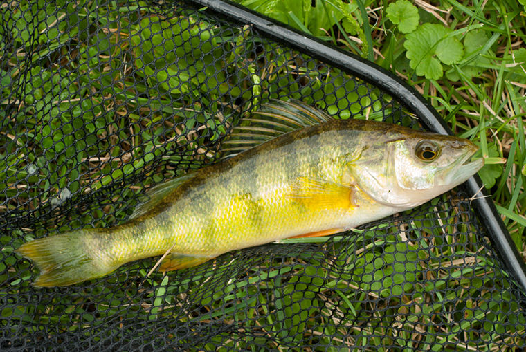 diesel spill, fishing, fishery, lake erie, perch, cleanup, hickory creek, nanticoke, imperial oil, walleye