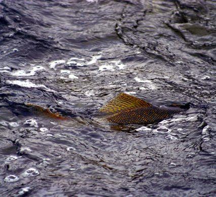 Fishing spawning