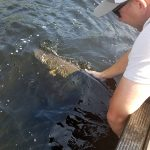 Jamie Laurin of Waubashene caught and released this giant muskie on Restoule Lake.