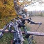 James West of Petersburg was bow hunting when this grouse dropped by for a visit.