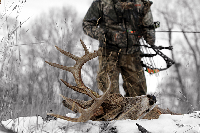 bowhunter approaching downed whitetail buck