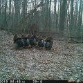 wild turkeys standing beside each other in a row