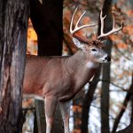 Mitchell Kincaid of London was scoping our new hunting spots when he photographed this beautiful buck.