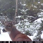Toufic El-Saikali of Ottawa sent in this tongue-wagging deer trail cam photo.