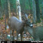 Matt Johnson of Huntsville caught some deer love on his trail cam from 2019.