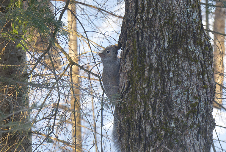 a squirrel hides out in a tree