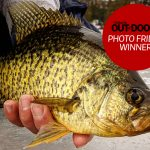 "Brian Johnson of Minden Hills caught this 14"" black crappie while fishing with a friend."