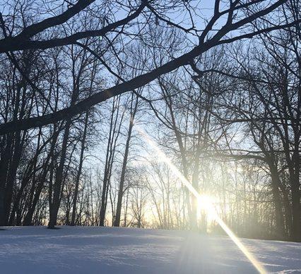 sunrise splits through the trees in a winter scene