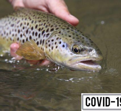Ask an Expert on fish handling