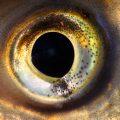 fish recovery fisheye