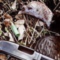 a fallen turkey with gun