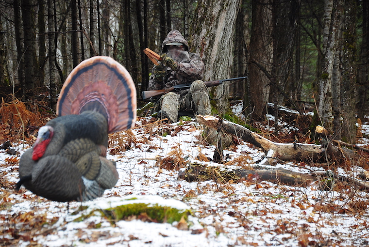 a lone hunter sits on a snow-speckled forest floor, regarding his turkey decoy, and calculating