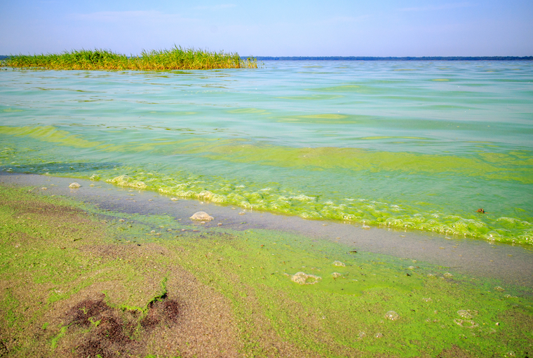 More microplastics in Lake Erie as algae washes up along the shoreline
