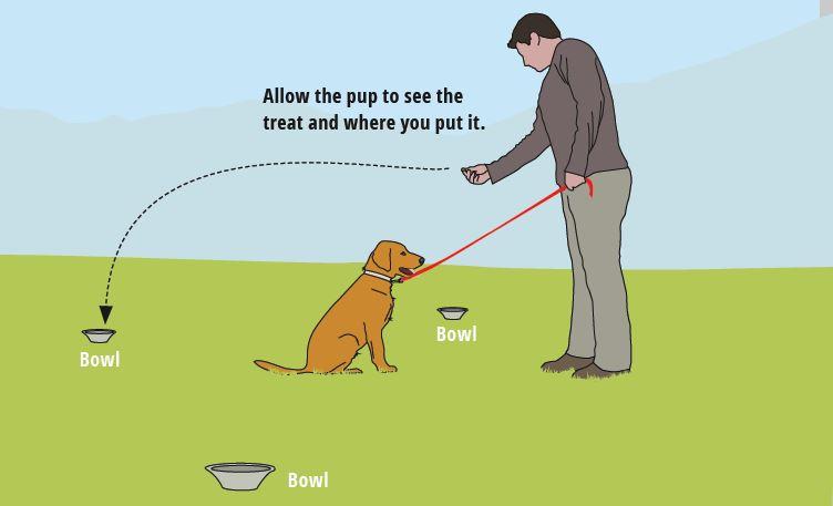 teaching dog hand signals