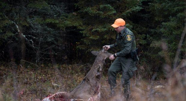 A CO hauling a deer carcass