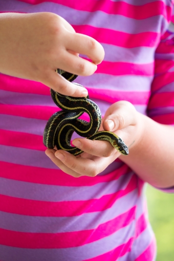 a sweet little snake interlaced in a child's hands