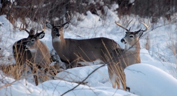 a wintery buck party