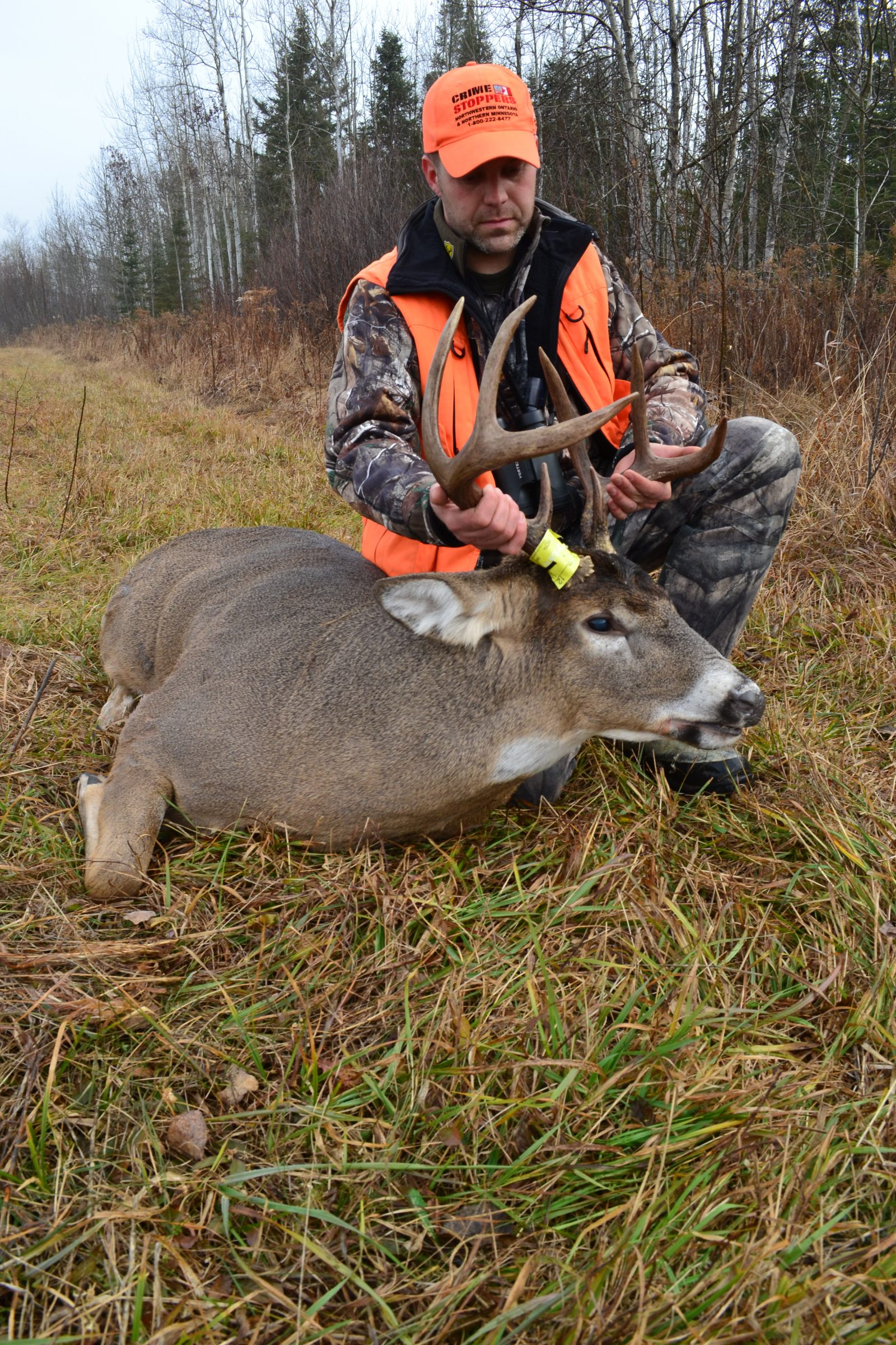 putting a tag on a buck