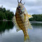 Klarissa Cluett of Kitchener reeled in the smallest fish on Horseshoe Lake.