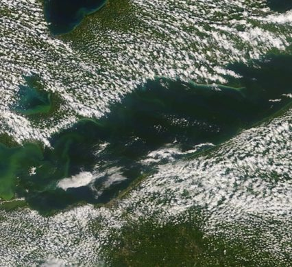 Fish wasting in Great Lakes' depths due in part to algae blooms