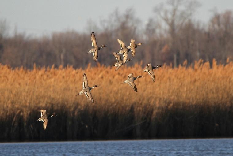 wings of change flying birds