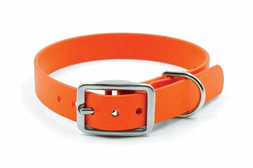 A hunter orange dog collar