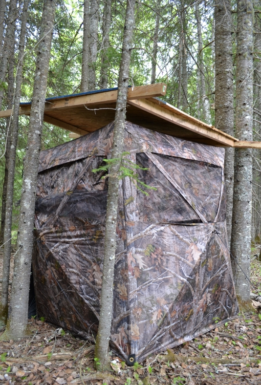 a camo blind between coniferous trees