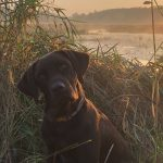 Kayla Wilson of New Liskeard took her chocolate-labrador retriever, Grizz, on his first duck hunt.
