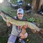 Tyler Lefley of Millbrook caught and carefully released this 48-inch, late-summer tiger muskie on the Otonabee River in Peterborough. He was using a Mepps bucktail spinner.