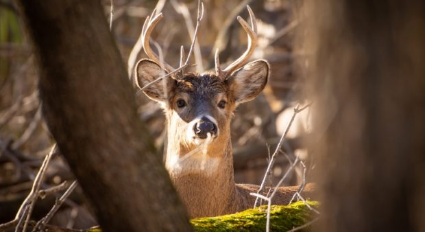 a deer appears through some branches of a tree