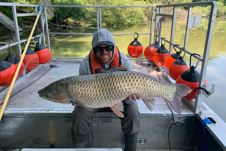 grass carp being held on a boat