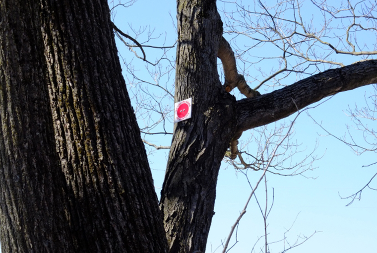 No trespassing sign on a tree