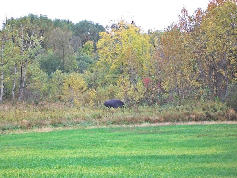 moose decoy