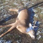 Richard Fillmore of Hamilton harvested two bucks and a doe within anhour and a half on the opening day of deer season, making it hisgreatest hunt.