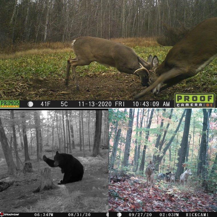 Trail Cam 2020 winners