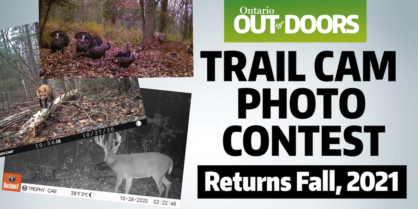 Trail Cam photo contest 2020
