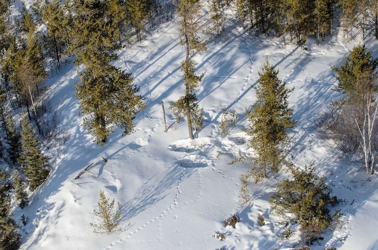 snowy landscape with deer tracks and deer beds